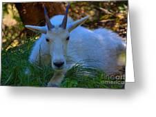 Shady Goat Greeting Card