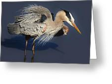 Shaking Out My Tail Feathers Greeting Card