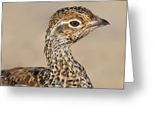 Sharp-tailed Grouse Greeting Card