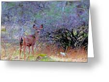 Shasta County Deer  Greeting Card