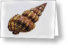 She Sells Seashells . . . Greeting Card