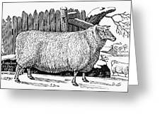 Sheep, 1788 Greeting Card