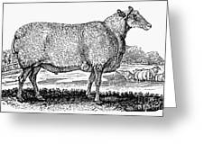 Sheep, C1800 Greeting Card by Granger
