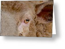 Sheep Close Up Greeting Card