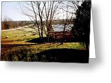 Sheep Farm Greeting Card