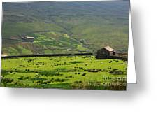 Sheep Graze In A Pasture In Swaledale Greeting Card
