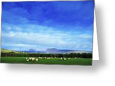 Sheep Grazing In Field County Wicklow Greeting Card