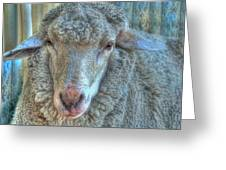 Sheep Greeting Card by Imagevixen Photography
