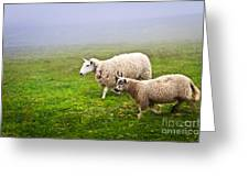 Sheep In Misty Meadow Greeting Card