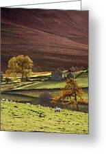 Sheep On A Hill, North Yorkshire Greeting Card