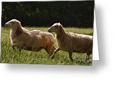 Sheep On The Move Greeting Card