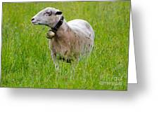 Sheep With A Bell Greeting Card