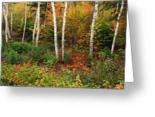 Shelburne Birches Greeting Card