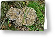 Shelf Fungus - Grifola Frondosa Greeting Card