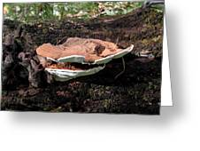 Shelf Mushrooms Greeting Card