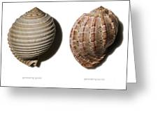 Shell Line Systems Greeting Card