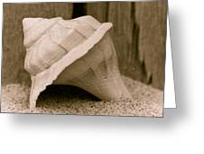 Shell On The Beach Greeting Card