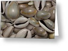 Shell Sigay 1 Greeting Card