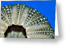 Shell With Pimples 2 Greeting Card