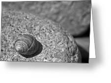 Shells IIi Greeting Card by David Rucker