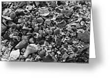 Shells Iv Greeting Card