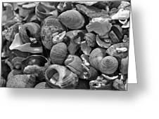 Shells V Greeting Card