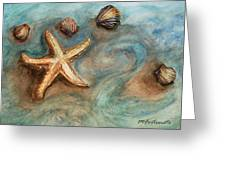 Shells With Star Greeting Card