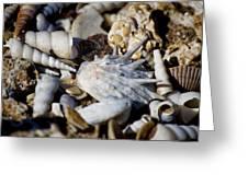Shelly Beach V2 Greeting Card