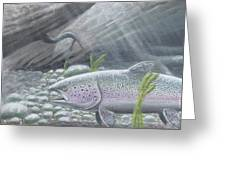 Shelter- Rainbow Trout Greeting Card
