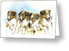 Sheltie Pups Greeting Card