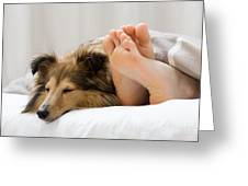 Sheltie Sleeping With Her Owner Greeting Card
