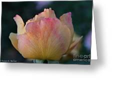 Sherbert Rose Bud Greeting Card
