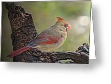 Shes An Early Bird  New Version Greeting Card