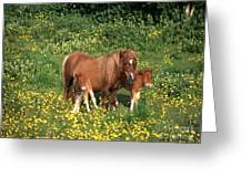 Shetland Pony With Foal Twins Greeting Card