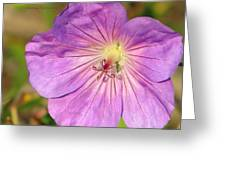 Shimmer Flower Greeting Card