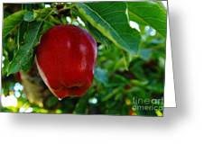 Shiny Red And Ripe  Greeting Card