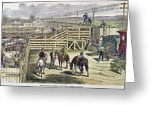 Shipping Cattle, 1877 Greeting Card