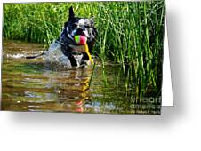 Shoreline Conditioning Greeting Card