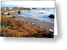 Shores Of Oregon Greeting Card