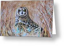 Short-eared Owl Greeting Card