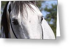 Show Horse At Mule Days Greeting Card