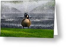 Showering Canadian Goose Greeting Card