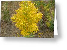 Showy Goldenrod Flower Greeting Card