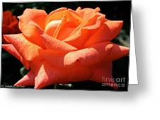 Shreveport Rose Greeting Card