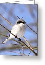 Shrike - Bird - Unique Beak Greeting Card