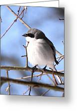 Shrike - Lonely Greeting Card