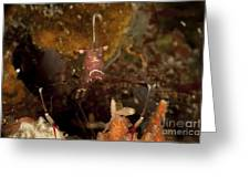 Shrimp With Legs And Claws Spread Wide Greeting Card