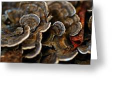 Shrooms Abstracted Greeting Card