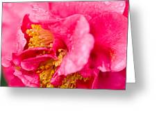 Shy Camellia Greeting Card