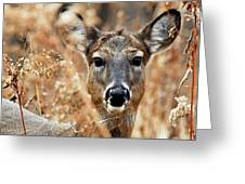 Shy Doe Greeting Card